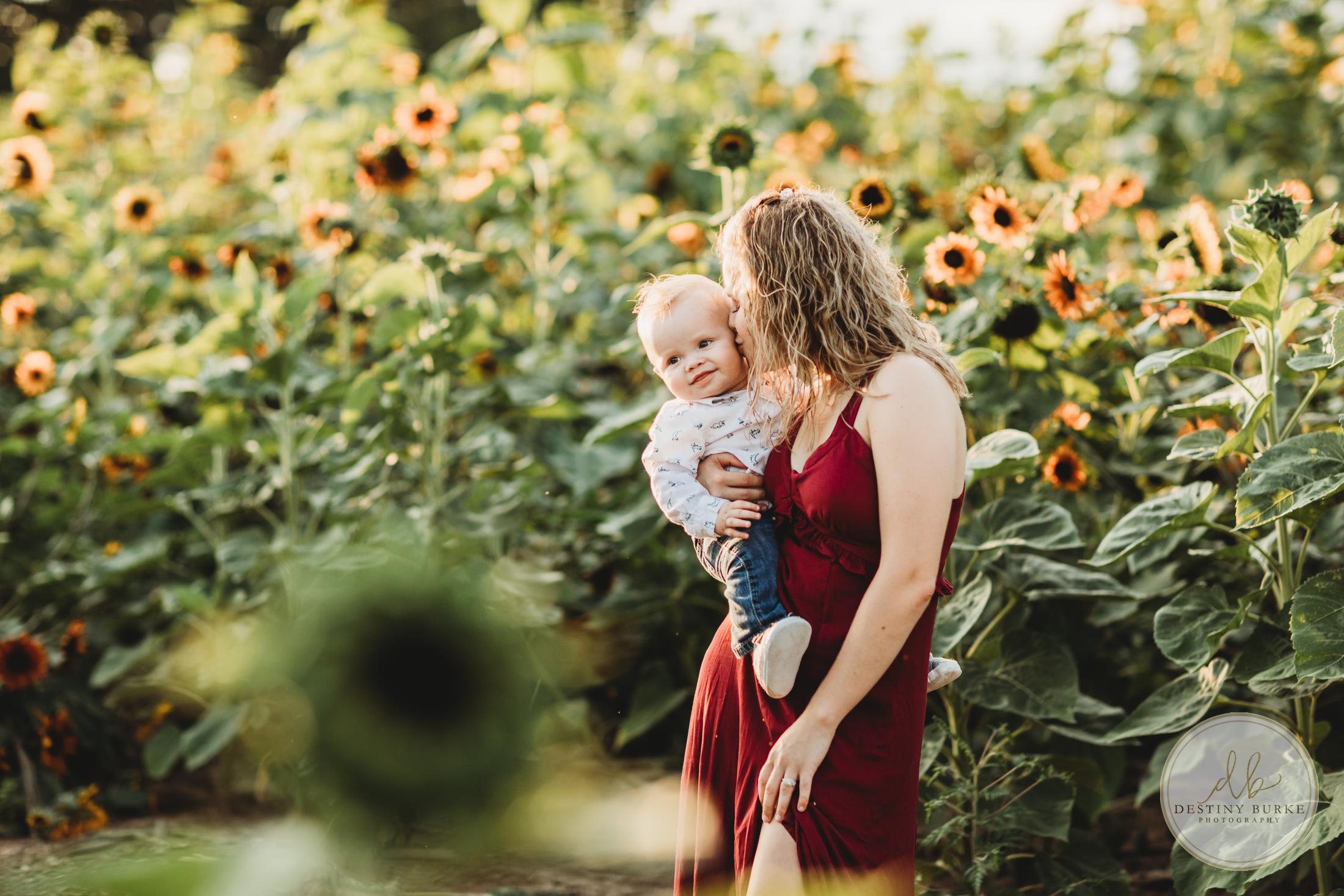 Stokoe, Farms, Sunflowers, Scottsville, NY, Photography