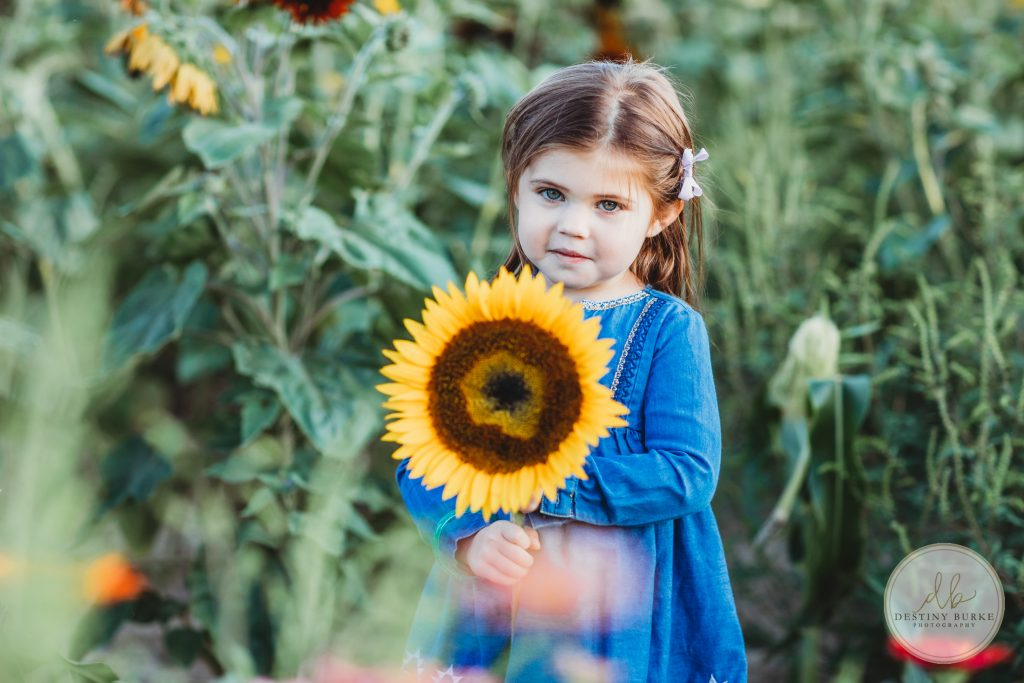 Stokoe, Farms, Sunflowers, Scottsville, NY, Photography