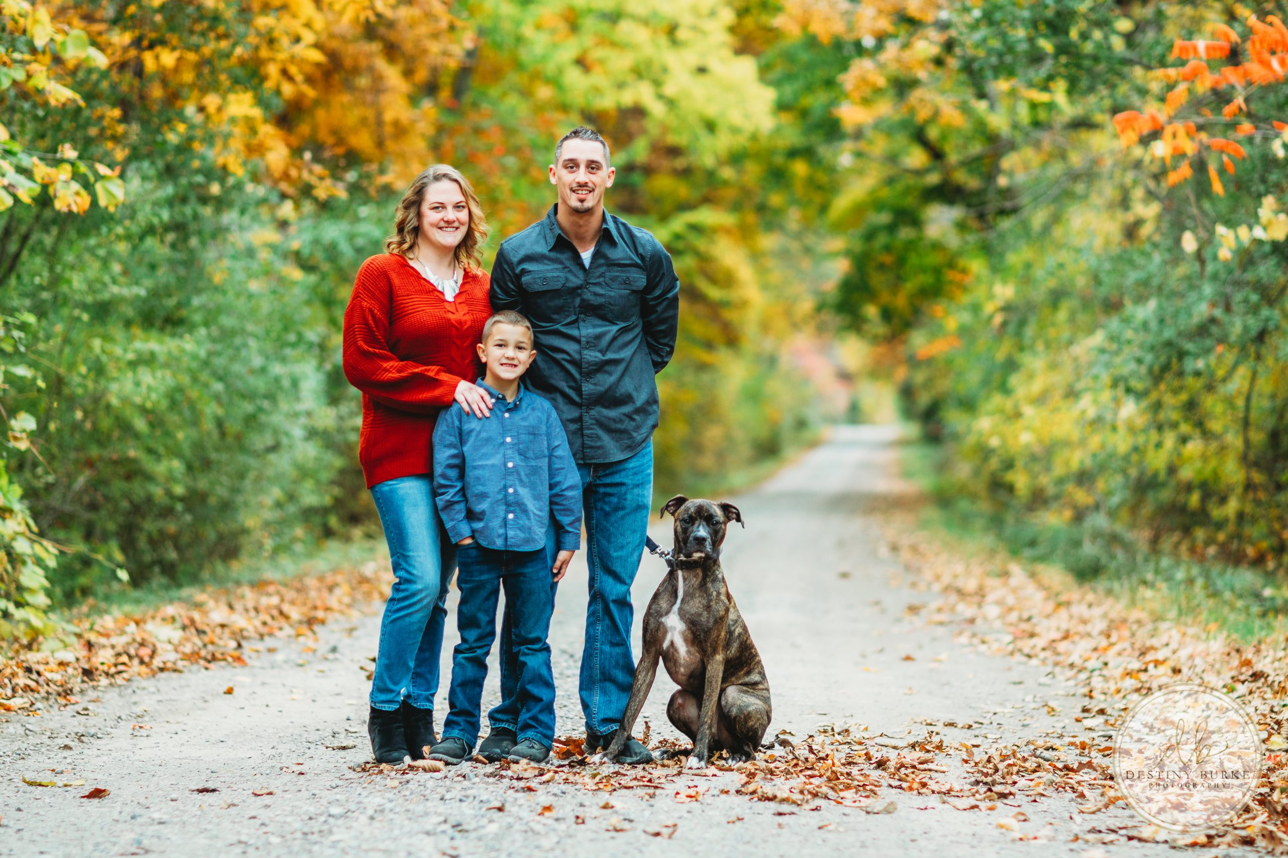 Family, Pet, Dog, Autumn, Fall, Leaves, Boxer, 3, Path, Road