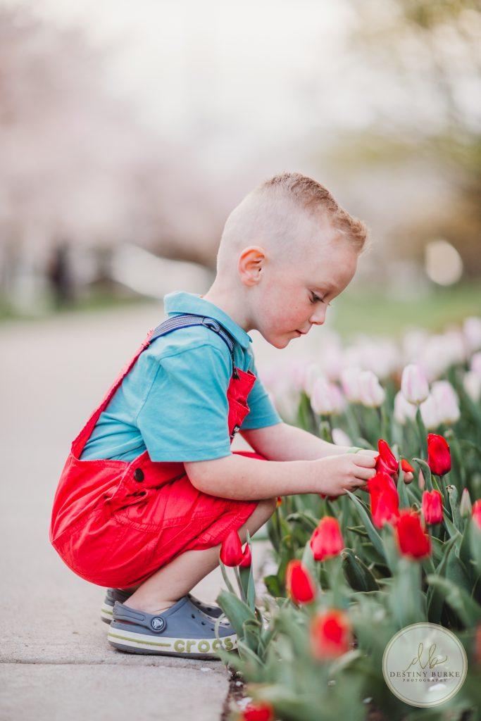 Child, flowers, tulips, red flowers, boy, kid